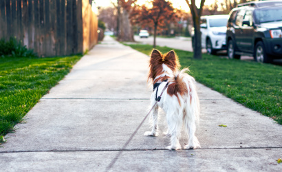 Majitelia psov dostanú sáčky na psie exkrementy a lopatku