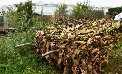 Medzi 29. novembrom a 2. decembrom bude prebiehať zber drevného odpadu