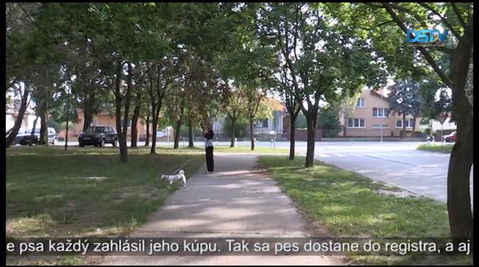 Embedded thumbnail for Mestu robia starosti začipované zatúlané psy, u ktorých ich majiteľ nie je zaevidovaný
