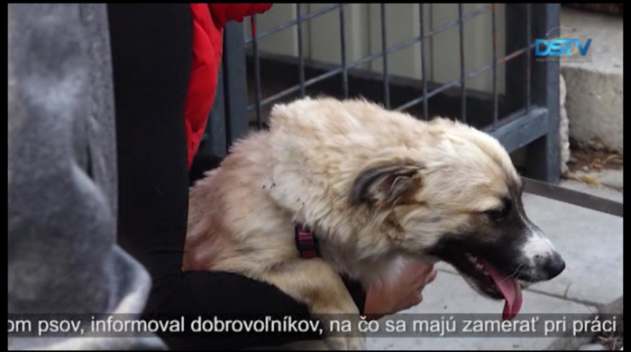 Embedded thumbnail for Rastie počet dobrovoľníkov, ktorí pomáhajú pri opatere túlavých psov