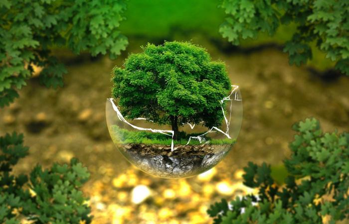 Ekologický čin roka 2019 je možné prihlásiť do konca februára