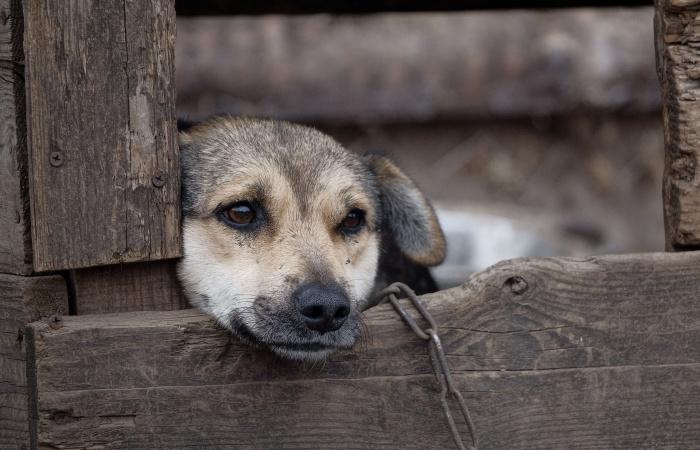 Sloboda zvierat chce pokračovať v boji proti držaniu psov na reťazi, zintenzívni kampaň