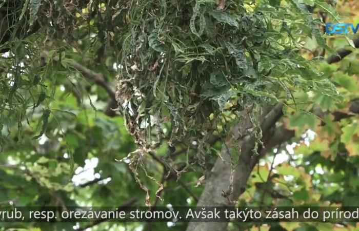 Embedded thumbnail for Vo verejnosti stále rezonuje úhyn stromov na Trhovisku