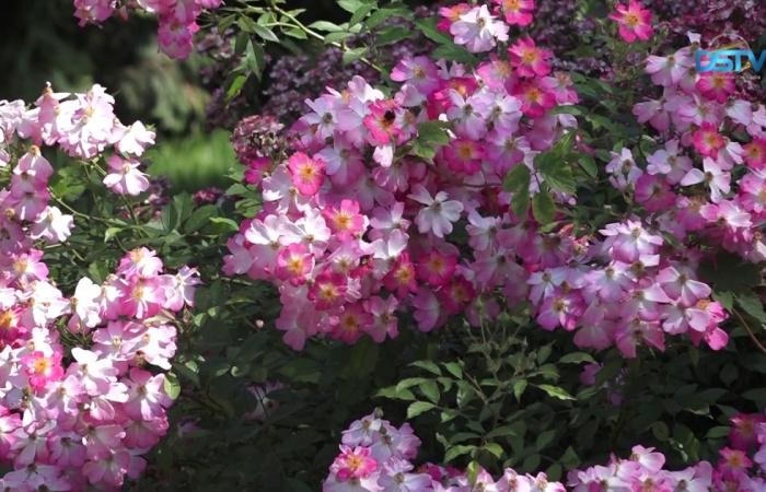 Embedded thumbnail for Príjemné chvíle v spoločnosti kráľovnej kvetov
