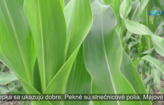 Embedded thumbnail for Pre slovenské poľnohospodárstvo bol rok 2018 ziskový