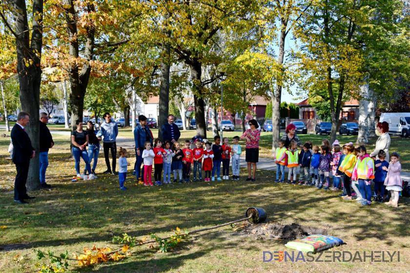 Program vysádzania stromov v meste pokračoval