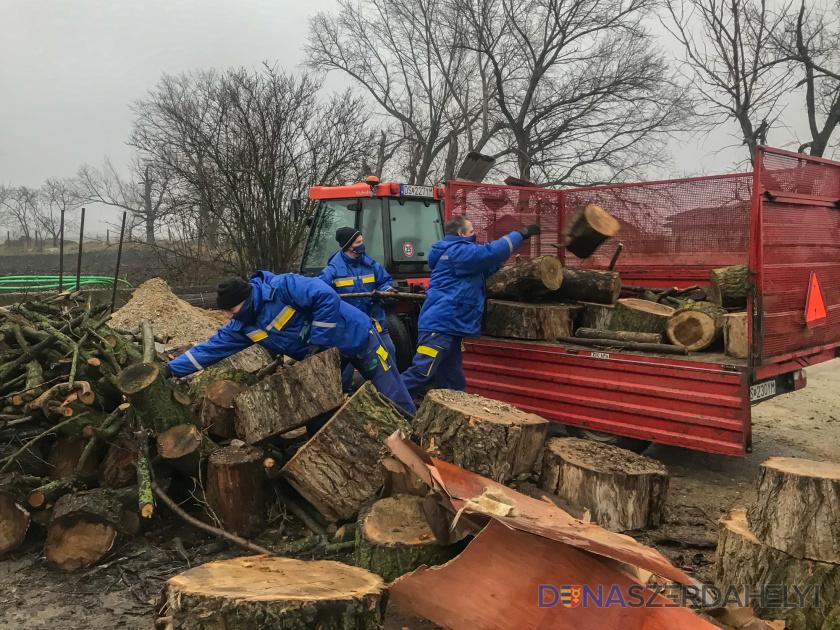 Program s drevom na kúrenie spustili skôr
