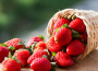 Pestovatelia volajú ľudí na samozber jahôd