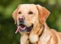 Zo zákona vyplýva každému majiteľovi psa povinnosť evidovať svojho psa